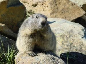 marmot trail 1