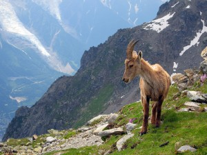 wildlife zermatt 4