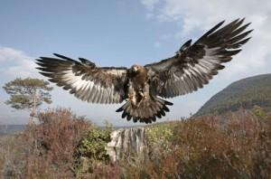 WS000005 eagle