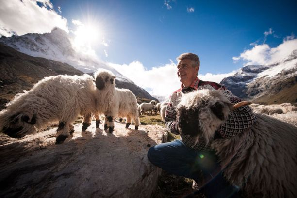 Guided Sheep Tour In Zermatt Zermatt